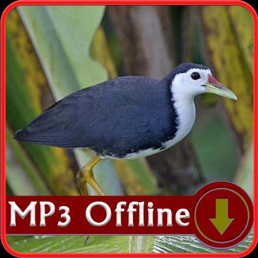 Suara Burung Ruak Ruak Offline Masteran Pikat For Android Apk Download