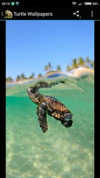 Turtle Wallpapers screenshot 3