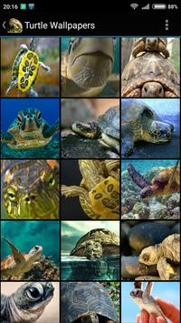 Turtle Wallpapers poster