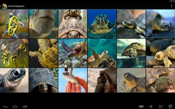 Turtle Wallpapers screenshot 5
