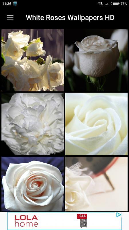 Fondos De Pantalla Rosas Blancas Hd Pour Android Téléchargez Lapk