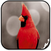 Bird Wallpapers icon