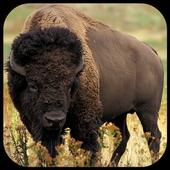 Bison / Buffalo Wallpapers icon