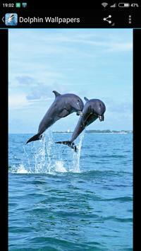Dolphin Wallpapers screenshot 3