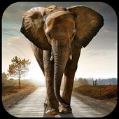 Elephant Wallpapers icon