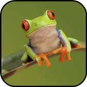 Frog Wallpapers icon
