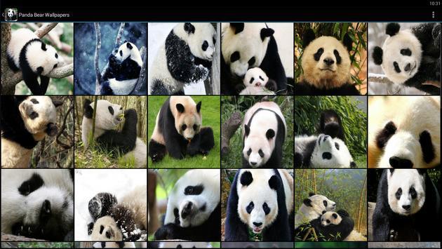 Panda Bear Wallpapers apk screenshot