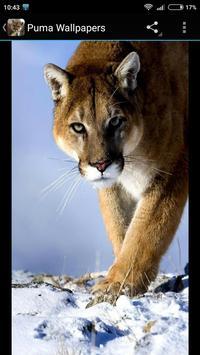 Puma Wallpapers screenshot 1
