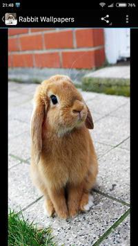 Rabbit Wallpapers apk screenshot