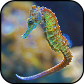 Seahorse Wallpapers icon