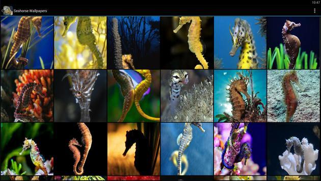 Seahorse Wallpapers screenshot 5