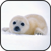 Seal Wallpapers icon