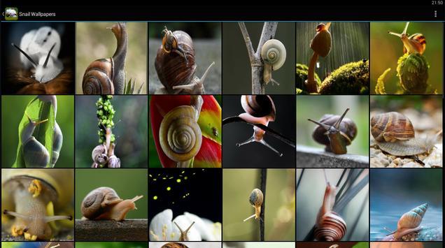 Snail Wallpapers apk screenshot