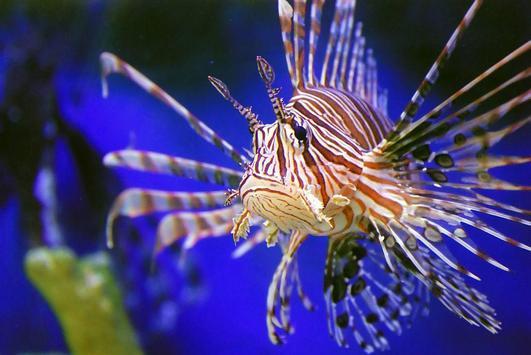 Marine Aquarium Fish Guide poster