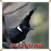 Cililin Master Mp3 icon
