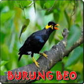 Suara Burung Beo icon