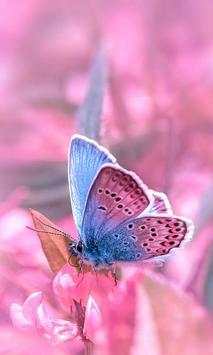 pink butterfly wallpapers poster