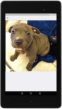 Pitbull Dog Training Guide screenshot 1