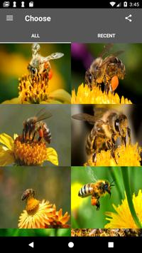 Honey Bee Wallpaper poster