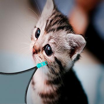 Zipper baby cat lock screen poster