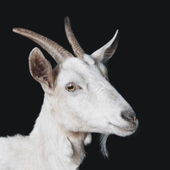 Qurbani App icon