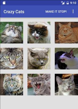 Crazy Cats apk screenshot