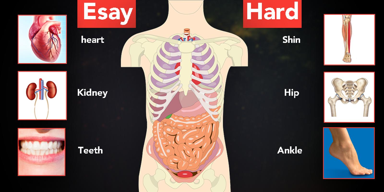 Learning Human Body Parts Educational Game For Android Apk Download