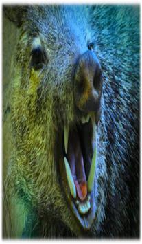 Boar Sounds apk screenshot