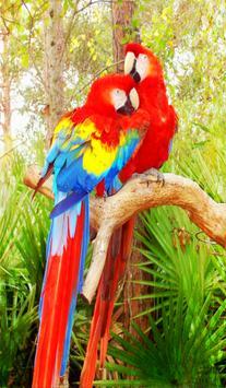 Parrot Sounds fx apk screenshot