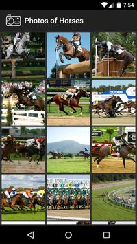 Photos of Horses poster
