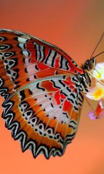 Jigsaw Puzzle Butterfly screenshot 2