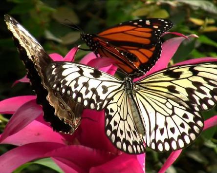 Jigsaw Puzzle Butterfly screenshot 3