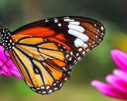 Jigsaw Puzzle Butterfly screenshot 4