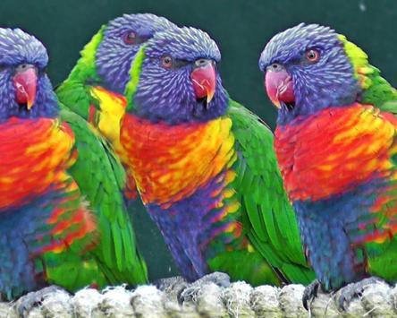 Birds Jigsaw Puzzle apk screenshot