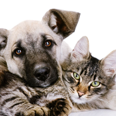 Cats Dogs Cute Photo Jigsaw Puzzle icon