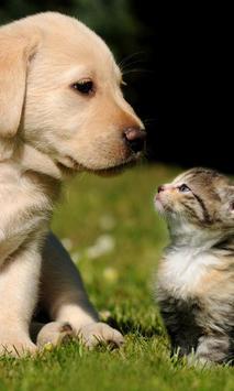 Cats Dogs Cute Photo Jigsaw Puzzle apk screenshot