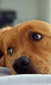 Dog Puzzle screenshot 2