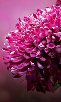 Flower Jigsaw Puzzles screenshot 1