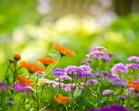Flower Jigsaw Puzzles screenshot 3