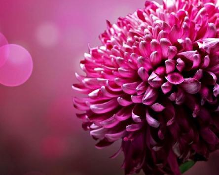 Flower Jigsaw Puzzles screenshot 4
