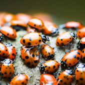 Insects Free Game Jigsaw Puzzle icon