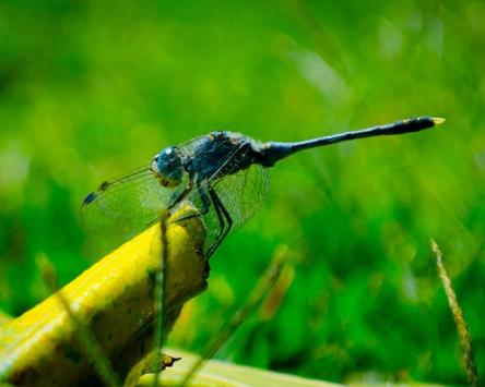 Insects Free Game Jigsaw Puzzle apk screenshot