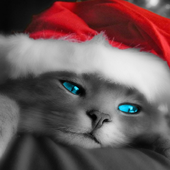 Kitty Christmas Puzzles Free Games icon