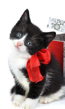 Kitty Christmas Puzzles Free Games poster