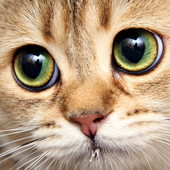 Kitty Free Game Jigsaw Puzzle icon