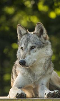 Wolf Jigsaw Puzzles apk screenshot