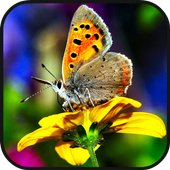 Butterfly HD icon