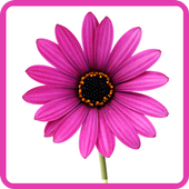 Flowers Pictures Wallpapers icon
