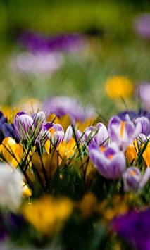 Flowers Pictures Wallpapers apk screenshot