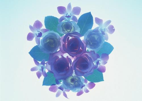 Love Flower Wallpaper apk screenshot
